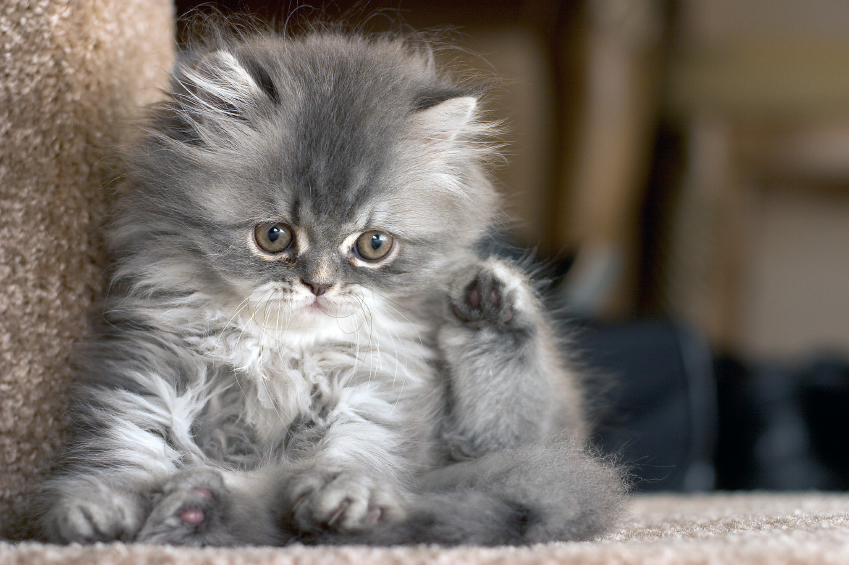 cute kittens ki...