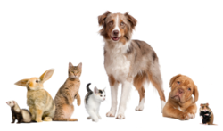 Veterinary Services for Dogs, Cats, Ferrets, Rabbits, Pocket Pets, Call 647-347-2299 with questions!