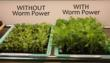 Harris Seeds Introduces Worm Power