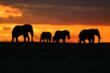 Smithsonian travelers enjoy a luxury safari experience