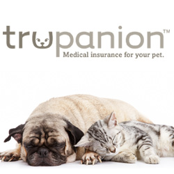 insurance for pets
