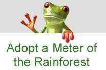 tropical rainforest preservation