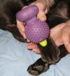 Reduces pain from Sesamoiditis of the paws or horse legs/hooves.