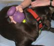 Pet Massage helps reduce stress and anxiety.