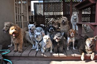 Largest indoor outdoor dog daycare resort coming to west for Dog boarding santa monica