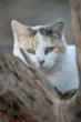 Lifeline for Free-Roaming Cats: Best Friends-Inspired SB 57 Passes...