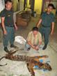 Suspected Tiger Smuggler Arrested in Indonesia Following Two-Day...