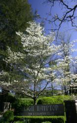 A beautiful white dogwood tree greets visitors at the enterance to High Hampton Inn