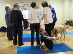 Dahn Yoga community, Dahn Yoga classes, Dahn Yoga exercises