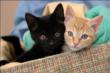 Rescued kittens Isabell and Isaac buddied up at Best Friends Animal Society's sanctuary; they are adopted now.