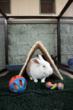 Toyz! I has 'em: at Best Friends Animal Society's Bunny House.