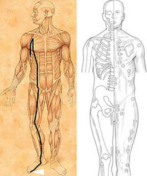 Acupuncture meridian and Chapman's Neurolymphatic Reflexes