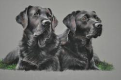 Dog portraits by Kay Witt