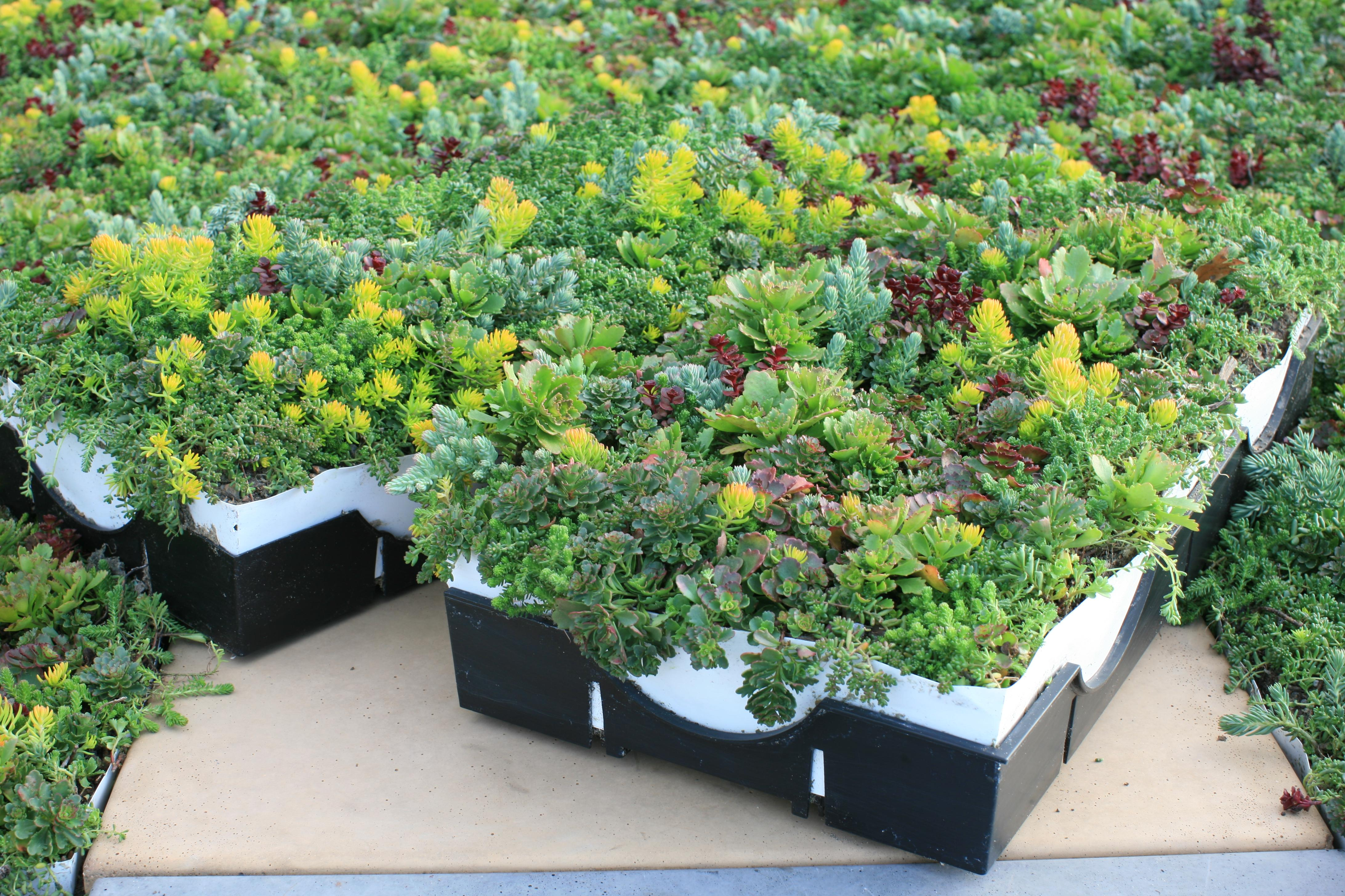 LiveRoof Fully Mature Plants ... & LiveRoof® Hybrid Green Roof System Selected for Five New Green ... memphite.com