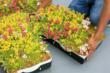 LiveRoof Hybrid Green Roof System