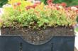 LiveRoof: The Most Horticulturally Refined Green Roof Design