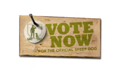 Vote for the Official Just Shorn Sheep Dog
