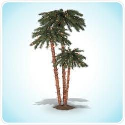 Catalina Breeze Palm Tree