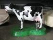 Dutchess the Milkable Cow