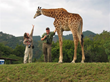 Host Cliff Tulpa and Videographer Marina Orden with Giraffe in South Africa