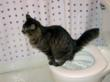 CitiKitty gets flooded with success stories and photos just like Mookie's here who learned to use the toilet in just four weeks with the CitiKitty Cat Toilet Training Kit.