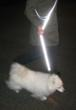 Vedante Super Reflective Silver Dog Leash at night