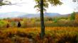 Fall Foliage with hikers