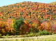 Mountain side in peak fall foliage