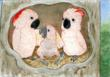 Cornelius as a baby cockatoo, in the nesthole with his mother and father.