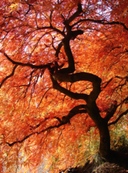 Crimson Canopy by Hannah Jones; winner of the Springbok Puzzles 2011 Image Contest