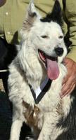 Tess, sponsoreod by Dyna-Pro dog probiotics, with medal