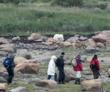 Walking with polar bears near Seal River Heritage Lodge on the coast of Hudson Bay near Seal River. Is it on your bucket list?