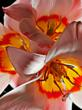 """Flower 200654"" by Raymond St. Arnaud will be on display during the HD Expo show"