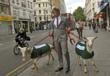 Oxford Street goats