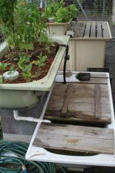 Bathtub Aquaponics