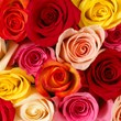 wholesale flowers, bulk flowers