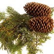 Christmas Greens, holiday decorations, bulk Christmas Greens, wholesale Christmas Greens