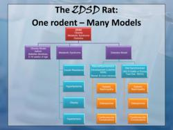 ZDSD Rat:  One Rodent - Many Models