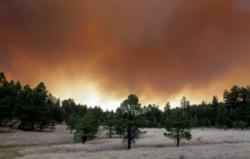 Smoke from the Wallow fire blocking out the sky over the Apache-Sitgreaves National Forest.