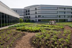 Chicago botanic garden and kraft foods partner to create kraft foods garden - Kraft foods chicago office ...