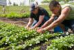Lynn O'Grady, a Kraft employee, assists Cook County Boot Camp graduate Aaron Serrano with thinning seedlings in the Kraft Foods Garden.