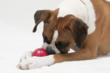 Secrets of a Working Dog: Always Keep Your Eyes on the Ball (Focus)