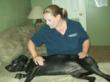 Canine Massage Therapy relieves tension