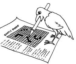 parrot doing puzzle