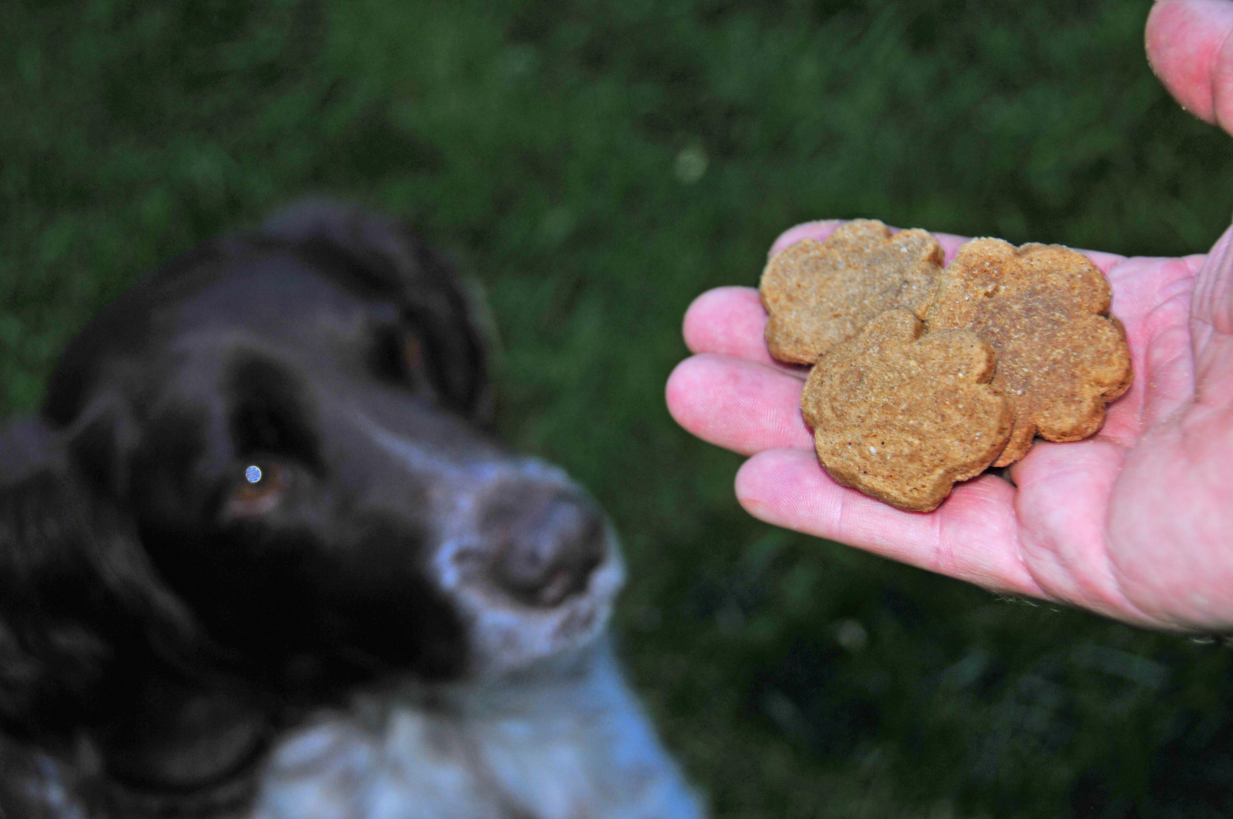 Is Trooper Dog Food Grain Free
