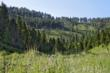 montana ranch auction , montana ranches for sale