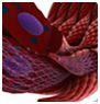 3D Anatomy Image