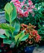 Container plants need more water than those in the bed or border.