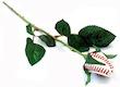 Long Stem Baseball Rose