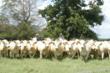 texas land for sale, texas ranch auction, texas land auction